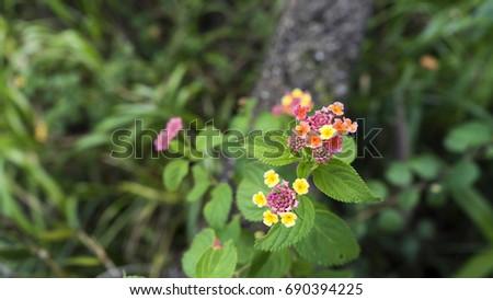 Flowers in the banachills park.  #690394225