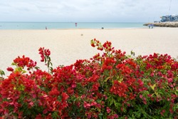 FLOWERS IN THE BEACH OF RED AND PINK COLORS. A CALM SEA WITH A BLUE INTENSE AND THE FINE AND AMAZING SAND. THIS IS COLORFUL GARDEN FRONT OF SEA.