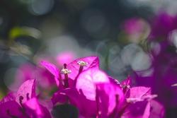 Flowers in the farmer's indoor garden