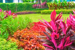 Flowers in the garden, Green lawn, The front lawn for background, Garden landscape design.