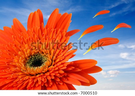 flowers isolated in a blue sky with Leafs flying