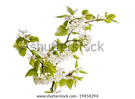 flowers isolated on white
