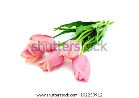 flowers isolated on white. group of tulips on a white background