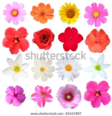Flowers isolated on white stock photo