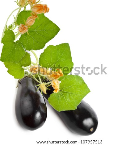 Flowers, leaves, fresh vegetable eggplant  isolated on a white background