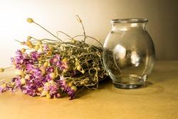 Flowers, nature, naturemort