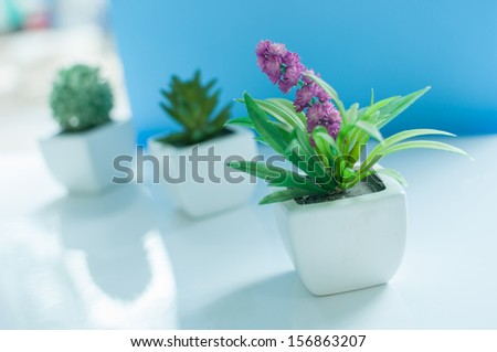 Flowers near a window in bright day