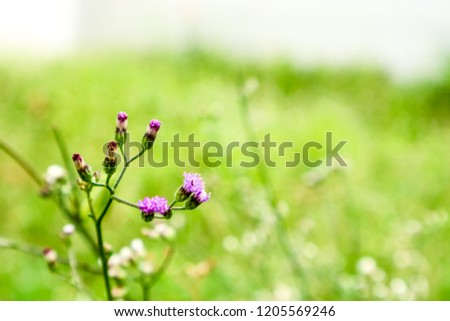 Flowers of blooming weeds After the rain and dew in the morning