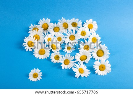 Flowers of camomiles on a blue background #655717786