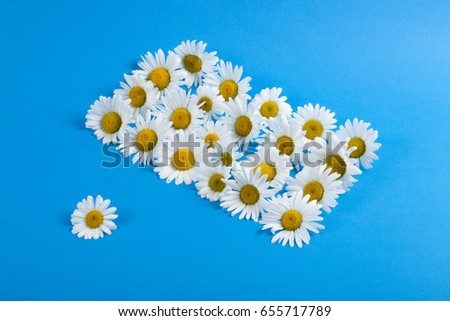 Flowers of camomiles on a blue background #655717789