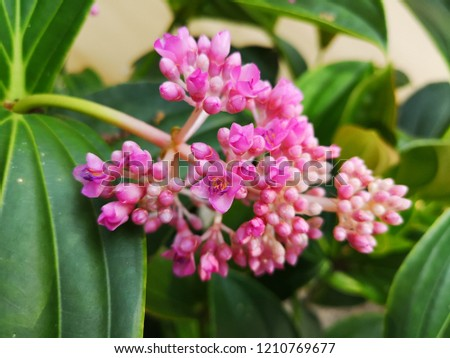 Free Photos Flowering Shrub With Small Pink Flowers Avopix