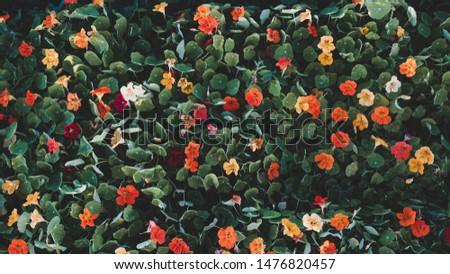 Flowers of different colors desktop wallpaper #1476820457
