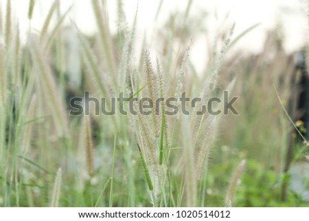 Flowers of grass. #1020514012