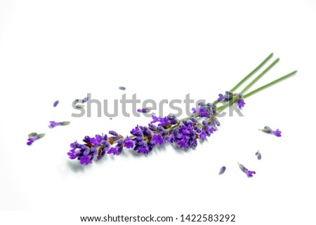Flowers of lavander, background with flowers Foto stock ©