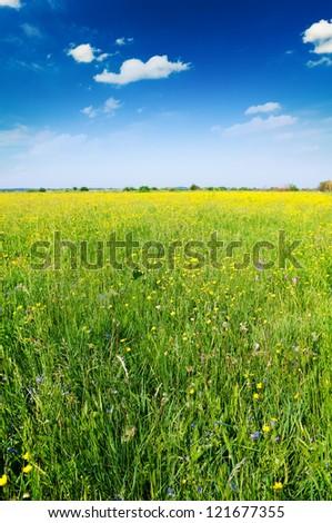 Flowers on a green summer meadow on the dark blue sky