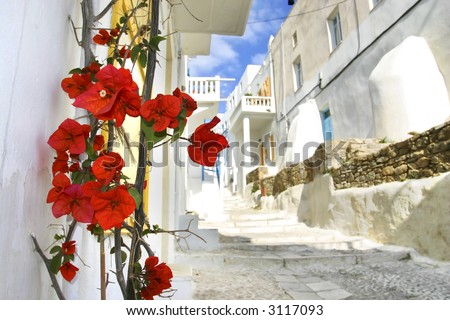 Flowers on a Mykonos street, Greece