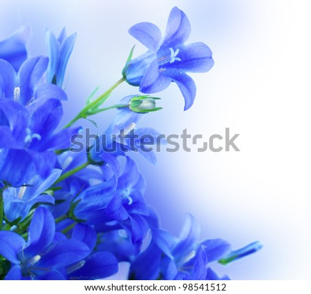 Flowers on a white background, dark blue hand bells