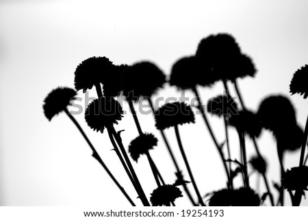 Flowers on an overcast day silhouetted by a cloudy sky