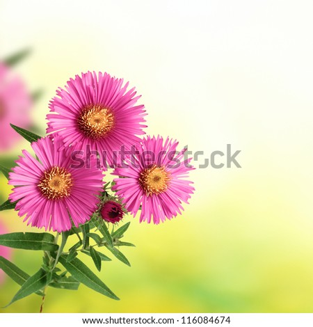 flowers on blurred green background and copyspace for a text