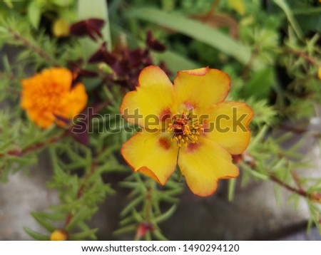Flowers on the label with seeds #1490294120