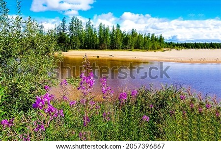 Flowers on the river bank. River flowers on shore. Flower on river shore