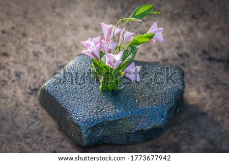 flowers on the rocks sprouted in summer