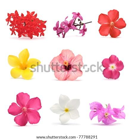 Flowers. Photo set - Shutterstock ID 77788291