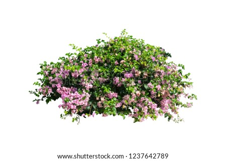 flowers plant bush tree isolated on white background with clipping path #1237642789