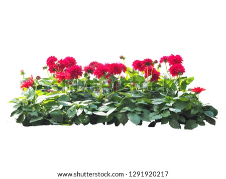 flowers plant bush tree isolated on white background  with clipping path #1291920217