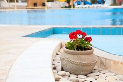 Flowers pot is on foreground of swimming pool, blue water of resort area, nobody