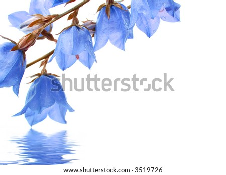 flowers reflected in water