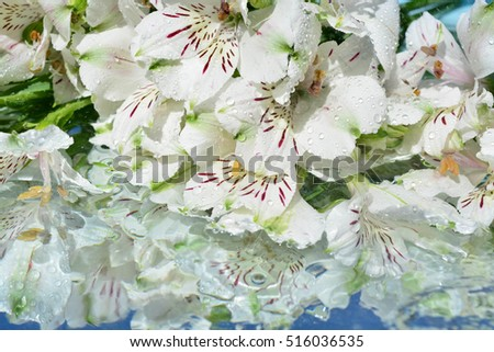 Flowers, reflection in pure water