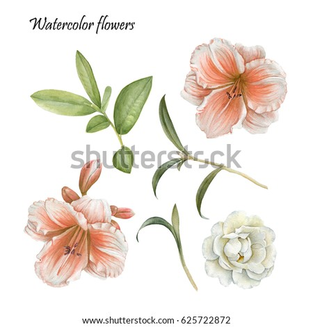 flowers set of watercolor lily  ...