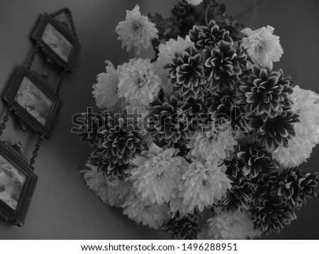 Flowers shown here in a vintage style black and white photo. Other flowers are in nature, some have insects, some in groups. Some are abstract and some are shown with just of drips of water, artistic.