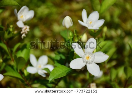Flowers - Small flowers, flowers, flowers - Natural background images.