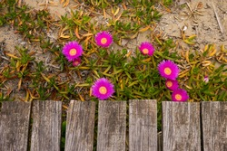 Flowers sprouting underneath the beach boardwalk