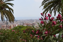 Flowers standing in Parc Guell, Barcellona in the background