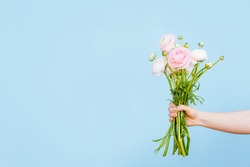 Flowers to gift. Beautiful ranunculus in female hands. Spring time and inspiration