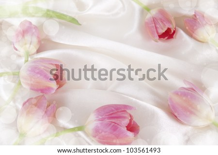 Flowers tulip on white background