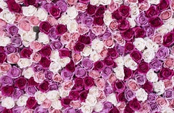 flowers wall background with amazing red and white roses.