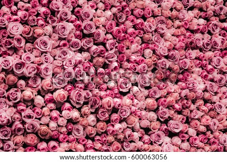flowers wall background with amazing roses #600063056