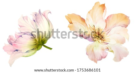 Flowers watercolor illustration.Manual composition.Big Set watercolor elements.