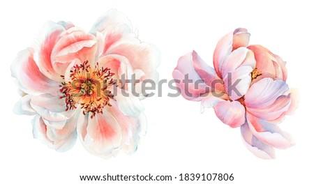 Flowers watercolor illustration. Manual composition. Big Set watercolor elements.