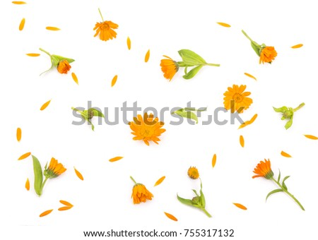 Flowers with leaves Calendula on a white background