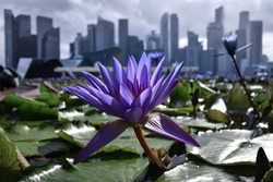 Flowers with Skyline of Singapore in Distance