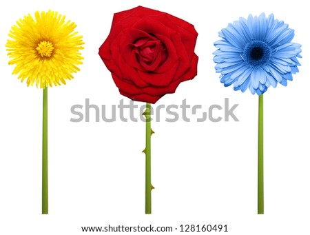 Flowers with stem isolated on white