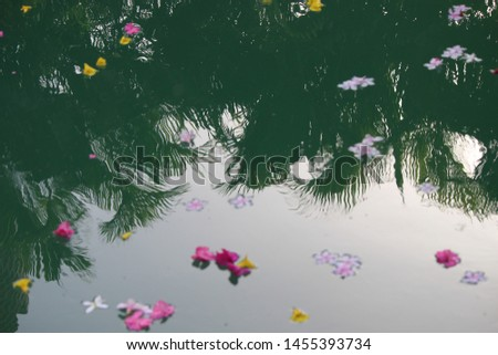 flowers with swimming pool,amazing moment,relaxing moment #1455393734
