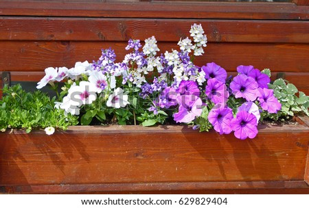 Flowers With Two White And Purple Color In Front Of A Little House