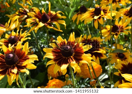 Flowers with vibrant summer colors #1411955132