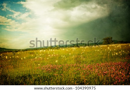 flowery meadow before a storm ...